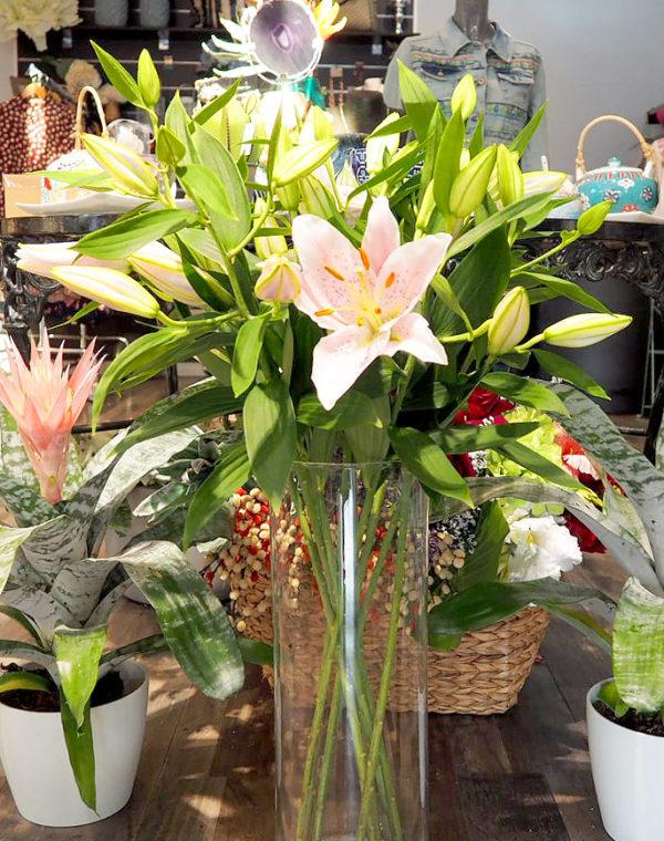 plantas y flores boadilla del monte